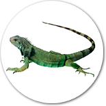 Clinica veterinaria para reptiles en Madrid.